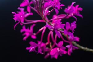 L IMG 4636 Växthuset Botaniska Trädgården
